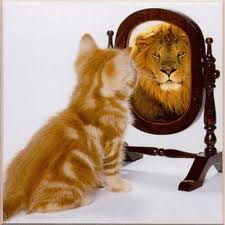 kitten in the mirror