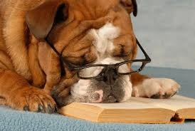 bulldog reading book
